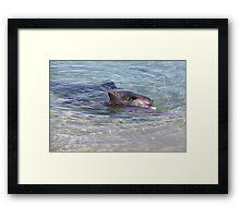 Monkey Mia Dolphins Framed Print