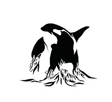 Killer Whale Photographic Print