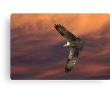Sunset Hunting Canvas Print