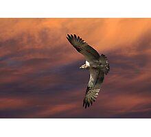 Sunset Hunting Photographic Print