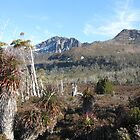Mt Ossa in the Tasmanian Highlands by PeterJF