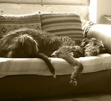 Let Sleeping Dogs by Wolfhound