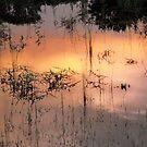 paddock /lake by Peta Hurley-Hill