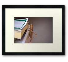A lot to read today Framed Print