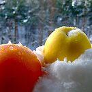 Winter colours by Bluesrose