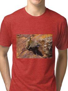 Baboon in Masai Lodge, KENYA Tri-blend T-Shirt