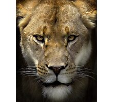 The Stare Photographic Print