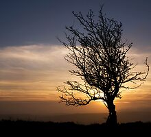 Evening winter light on Exmoor 1 by Lorraine Parramore
