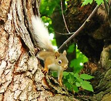 The Squirrel With The Flaxen Hair by artwhiz47