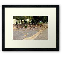 Mob of Kangaroos Framed Print