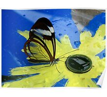 Glasswing on Yellow and Blue Poster