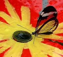 Glasswing on Red and Yellow by ienemien