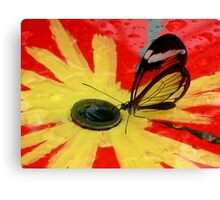 Glasswing on Red and Yellow Canvas Print