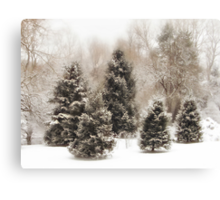 Snow Pines Canvas Print