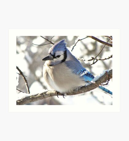 Icy Blue Morning (Blue Jay) Art Print