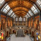 Natural History museum by Shaun Whiteman