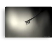 Drop in the Dark Canvas Print