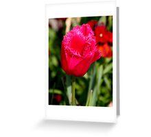 Tulip at St. Pauls Greeting Card