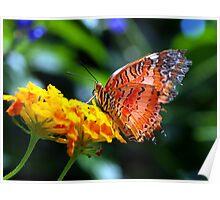 Butterfly Fresco Poster