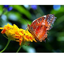 Butterfly Fresco Photographic Print