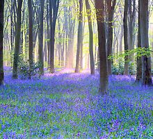 Bluebell Wood at Dawn by SteveOnTheRun