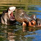 Common Hippo and Baby by Sheila Smith