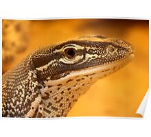 Ridge-tailed Monitor Poster