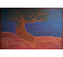 Welcome Back Juniper Tree 2015 Photographic Print