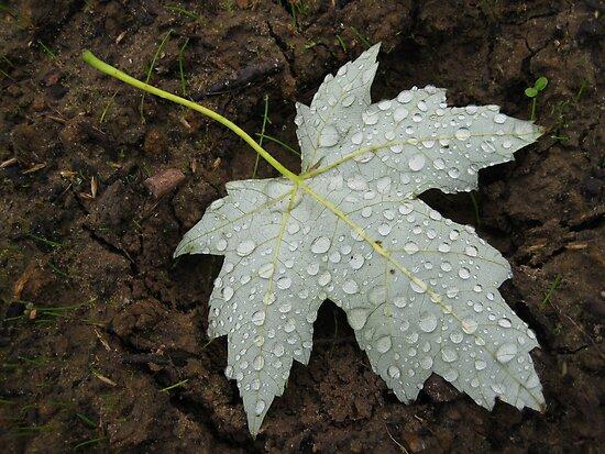 A leaf by DJ-Stotty