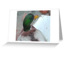 Silky mullard duck Greeting Card