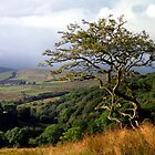 Roeburndale, Forest of Bowland by mikebov