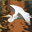 Great white egret in flight 2 by jozi1