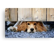 Can I come? Canvas Print