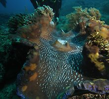 Furry Giant Clam by cute-wildlife