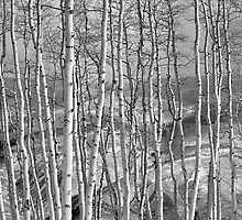 Aspen Stand in Vail Valley by ShotByAWolf