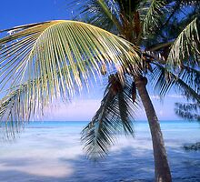 """Caribbean Breeze"" - palm tree in Nassau, Bahamas by John Hartung"