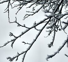 Frosty tree branch by nkphotography