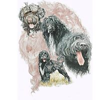 Portuguese Water Dog /Ghost Photographic Print