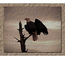 One Tree, One Eagle Photographic Print