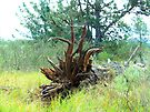 """""""Uprooted Tree Wears Deer Horn Disguise"""" by waddleudo"""