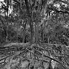 Roots of Life by David Lee Thompson