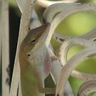 "Smoky Mountain ""Anole Lizard exercises"" - one, two, one, two  by JeffeeArt4u"