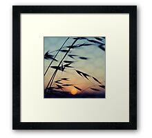 Cottesloe Beach Grass & Sun Framed Print