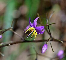 Precious Purple by Phrancis Whiteley