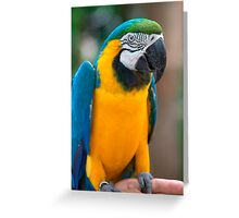 Blue and Gold Macaw, Brazil, South America Greeting Card