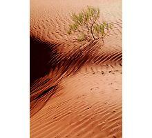 I will Survive!...Simpson Desert Photographic Print