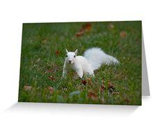 Grassy White Surprise Greeting Card