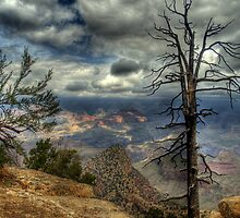 The Raven's Perch by K D Graves Photography
