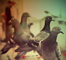 Doves Day by picontagious