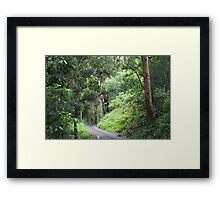 Morning Walk in Tallebudgera Valley Framed Print